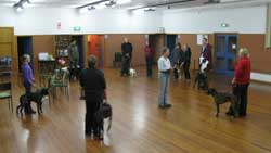 Life Skills Dog Training Class in Christchurch, New Zealand