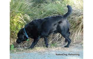 Bones- Rehomed in Christchurch